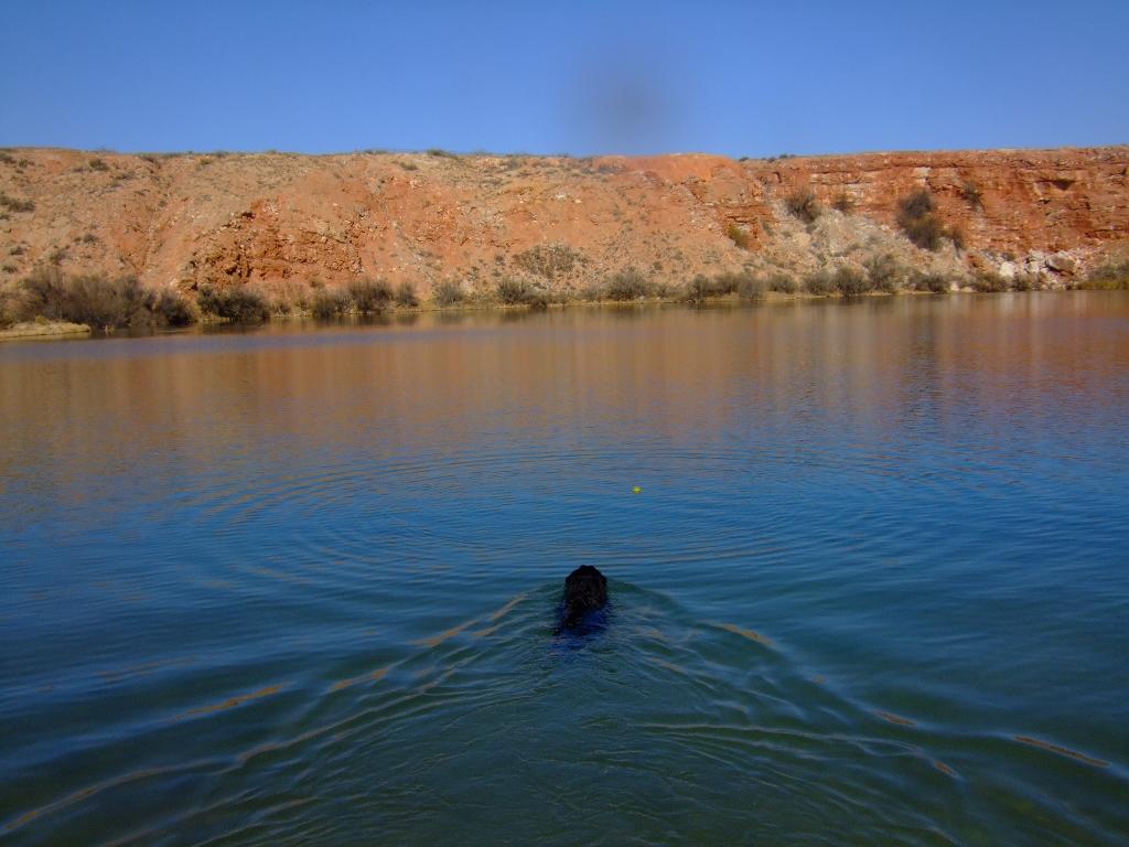 Hank swam (1024x768)